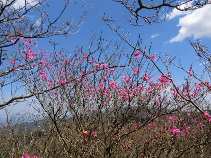 シラケ山から2
