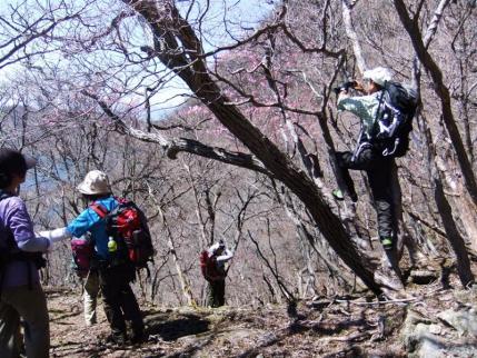 木登りオジサン