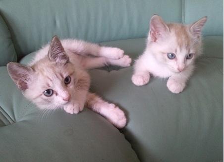 ナナ&ミミ