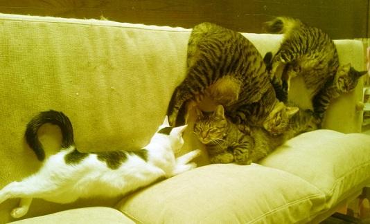 躍動する猫達