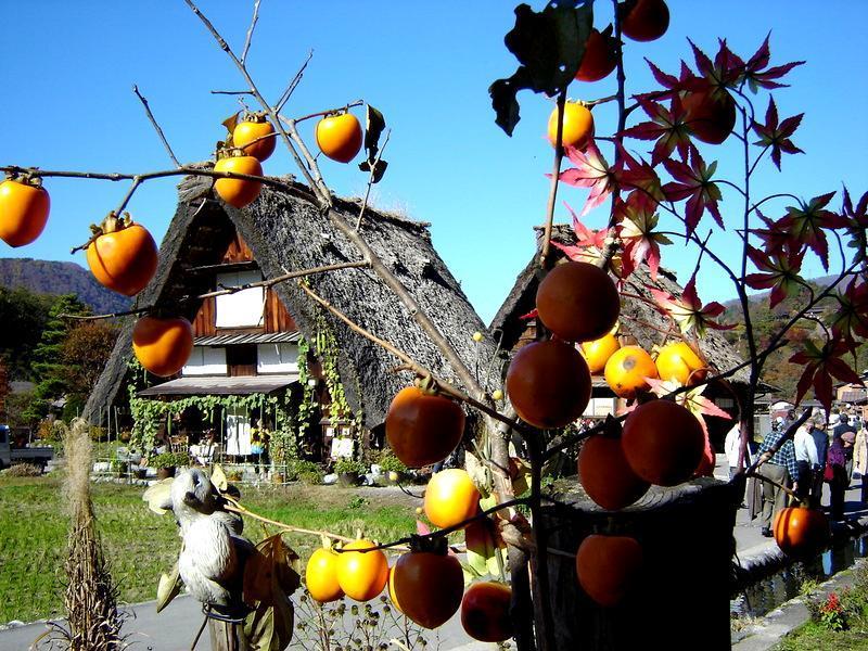 秋深まる世界遺産 白川郷の風景 ①