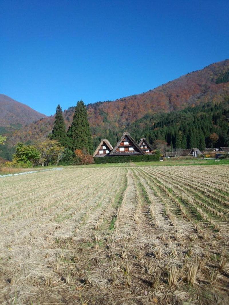 紅葉まっさかりの秋と雪景色が楽しめる季節!秋から冬にかけての白川郷は四季を感じられるよ ①