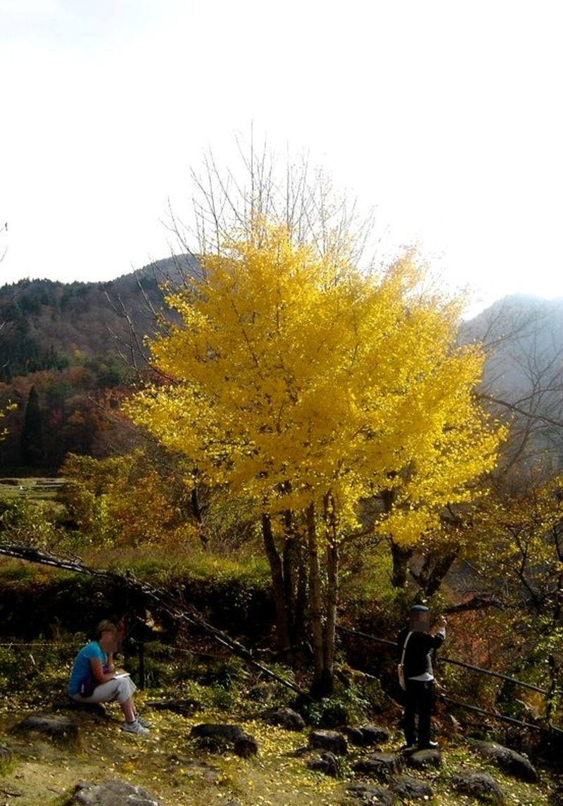 晩秋の白川郷風景 ⑤