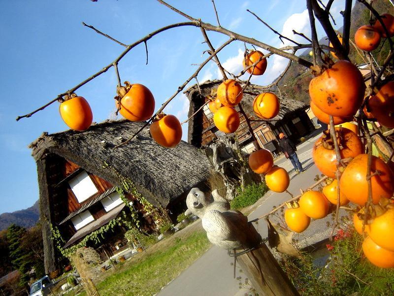 世界遺産 白川郷は 紅葉も終盤 木の葉の落ちた山々がじっと冬の便りを待っているようです ⑦