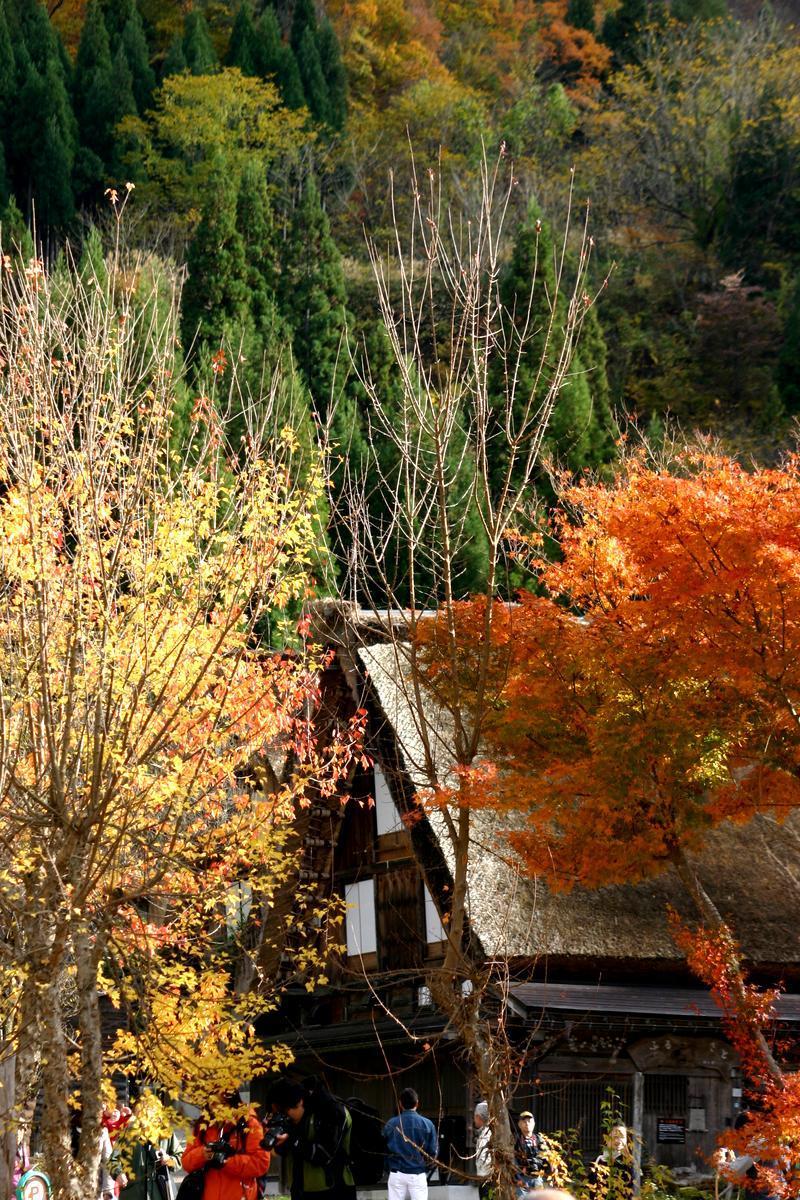 世界遺産 白川郷は 紅葉も終盤 木の葉の落ちた山々がじっと冬の便りを待っているようです ⑨