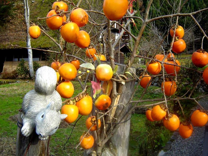 秋の過ごしやすい日もだんだんと終わり、肌寒い日が続いて来ました(^O^)/ ⑦