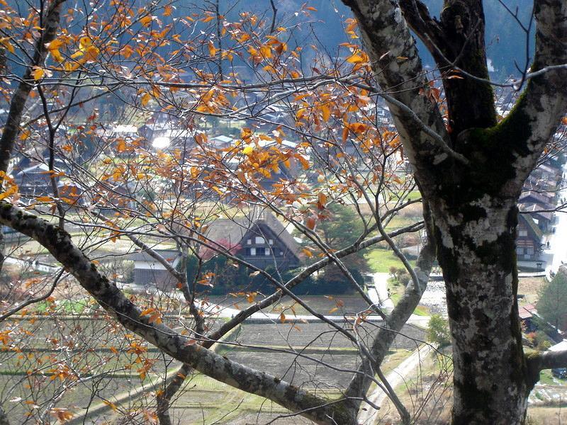 いよいよ朝・晩も冷え込み冬の訪れを肌で感じる季節になって参りました世界遺産 白川郷 ①
