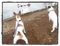 kn9_20121224105220.jpg