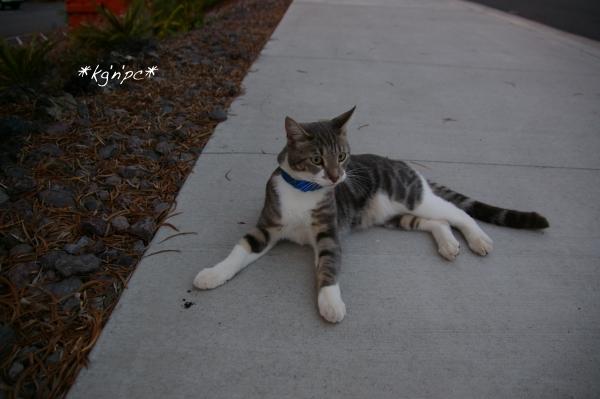 cat_011213.jpg