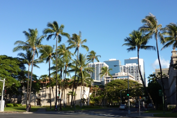 honolulutree20120705223759.jpg