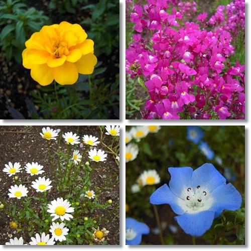 くじゅう花公園で咲くお花たち