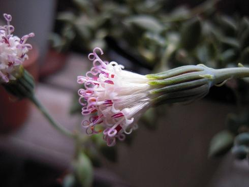 グリーンネックレス・花
