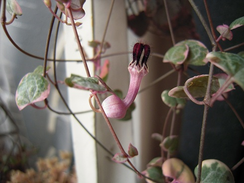 レディーハートのお花・11月