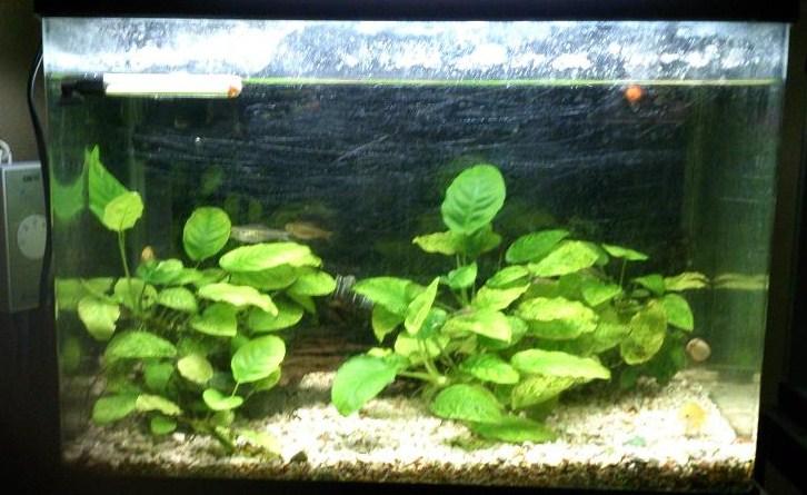 2012/12/8撮影 熱帯魚水槽