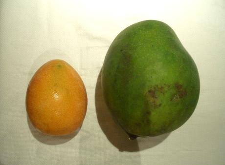 マンゴー 対比