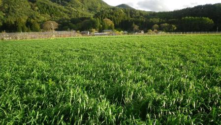 2012-5-4黒麦
