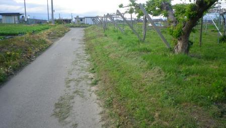2012-5-11土手の草刈り
