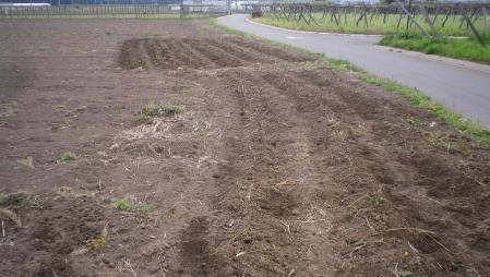 2012-5-17夏野菜1