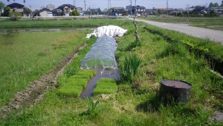 2012-5-19田んぼ
