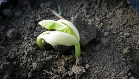 2012-5-21黒小豆