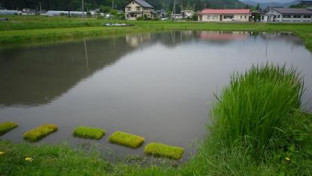 2012-6-5田んぼ.JPG (1)