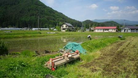 2012-6-8田んぼ