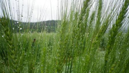 2012-6-10黒麦3