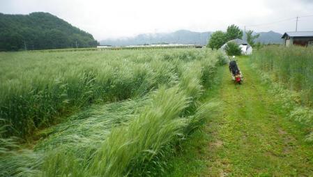 2012-6-10黒麦2