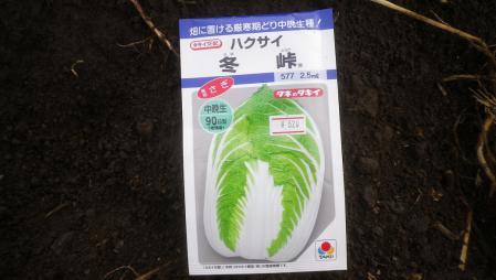 白菜 (6)