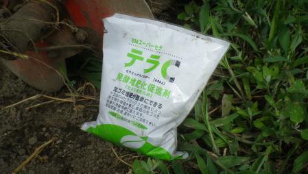 白菜 (4)