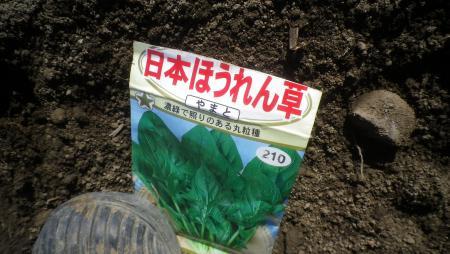 日本ほうれん草 (2)