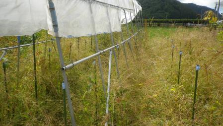 桔梗農場 (4)