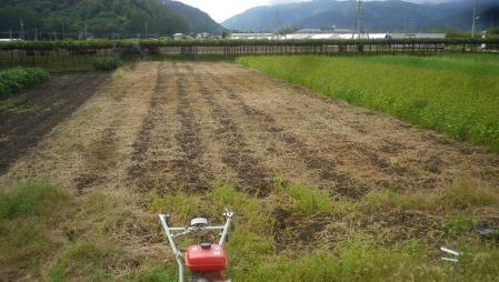 桔梗農場 (1)