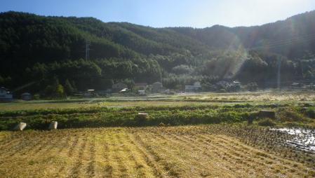 田んぼ (4)