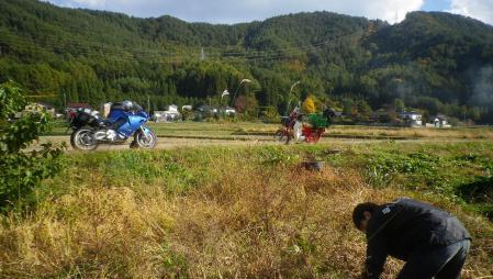 大豆刈り取り (2)