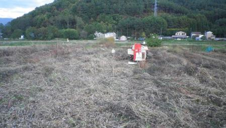 大豆脱穀作業 (1)