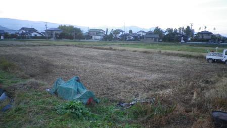 大豆収獲 (3)