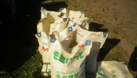 大豆のゴミ取り (2)