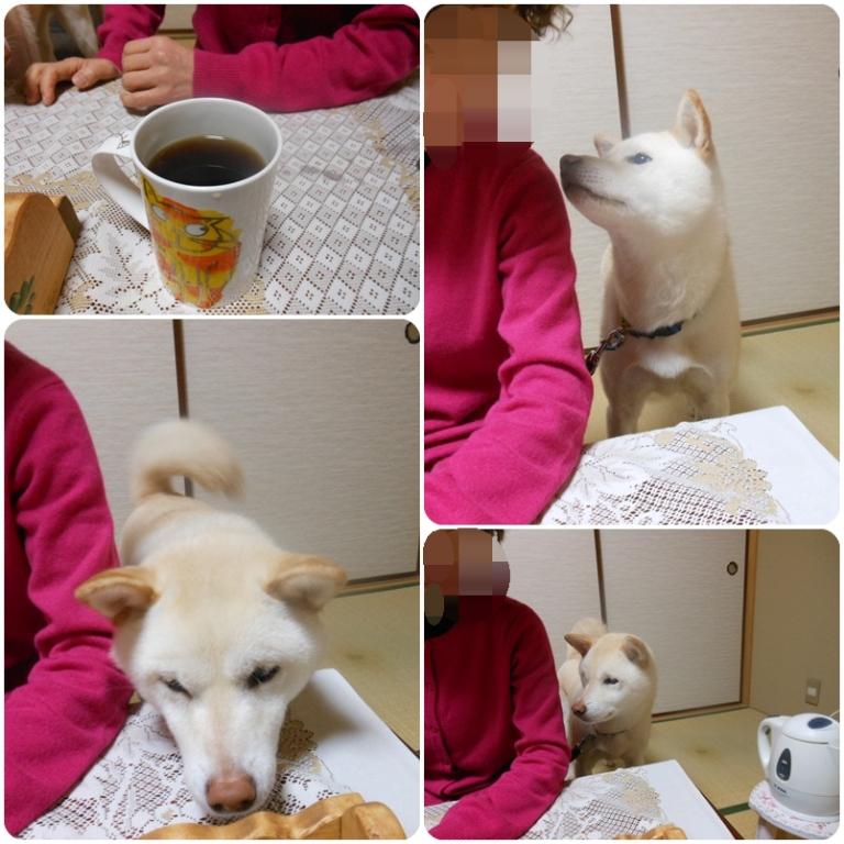 コーヒーのモニターをしたよ(*^^)v