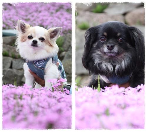 花のじゅうたん⑤