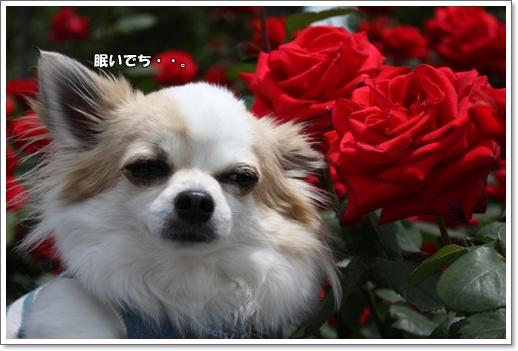 IMG_0298・2