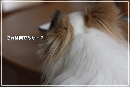 IMG_2603・2