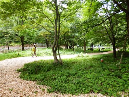 森林セラピーロード