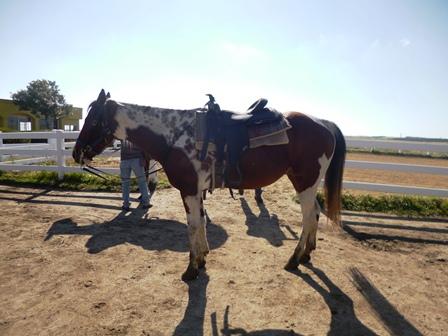 pin t horse