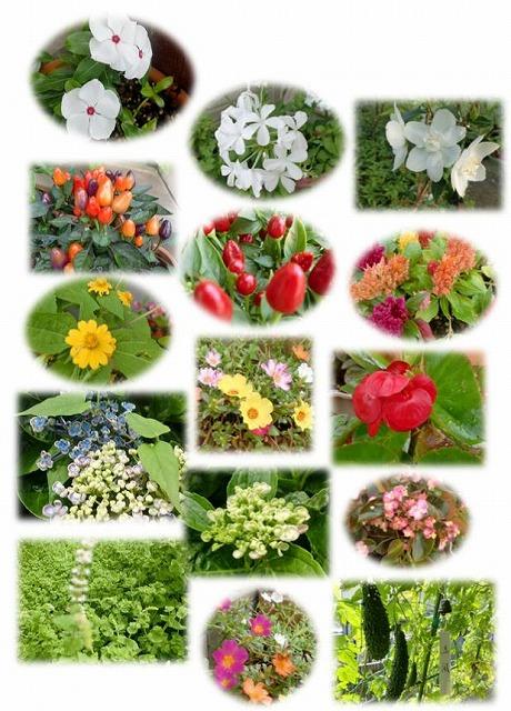 庭先の花達
