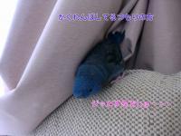 BseuPnucU_AIAR51370171476_1370171595.jpg