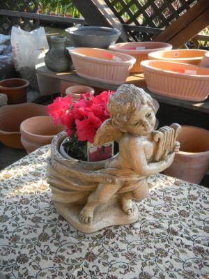 アザレアと鉢