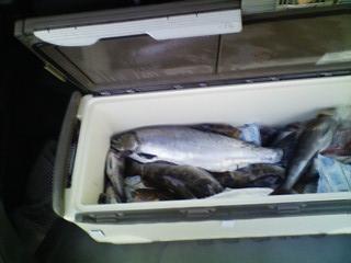 2012.07.08 マゾイやアイナメ大漁