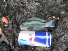2012.12.02 ショート缶サイズ
