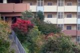 ベルデ名谷 急斜面の紅葉